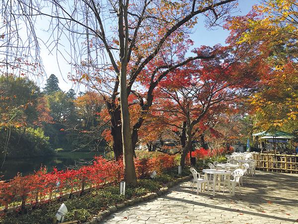お城のお堀に映えるあざやかな紅葉並木