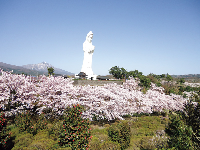 桜花の咲く丘に