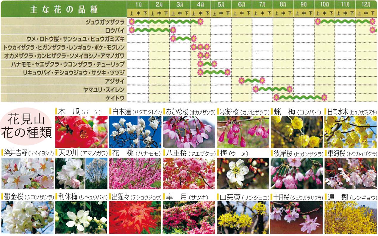 ▲花見山 見頃の時期 花見山 花の種類